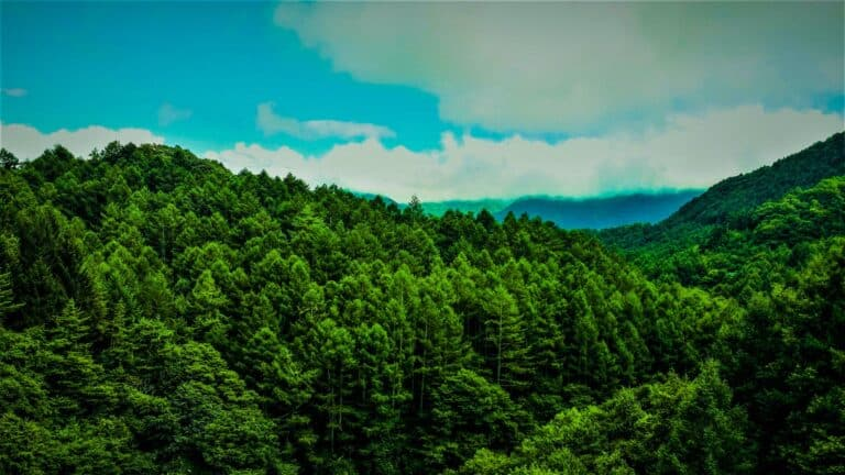 International Day of Forests Photo